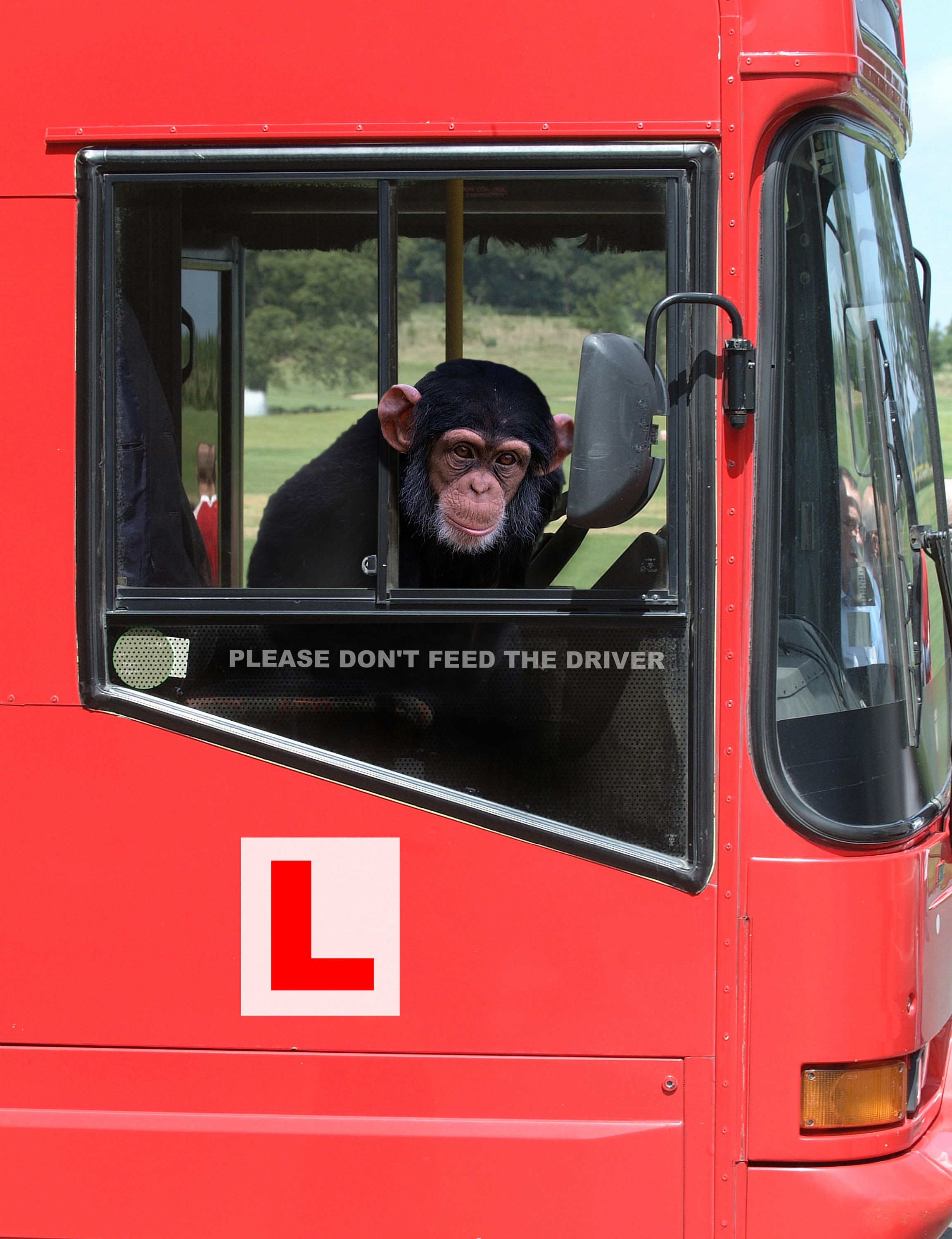 Monkey driving - A visit to the Dublin Zoo is one of the top things to do in Dublin on Sunday