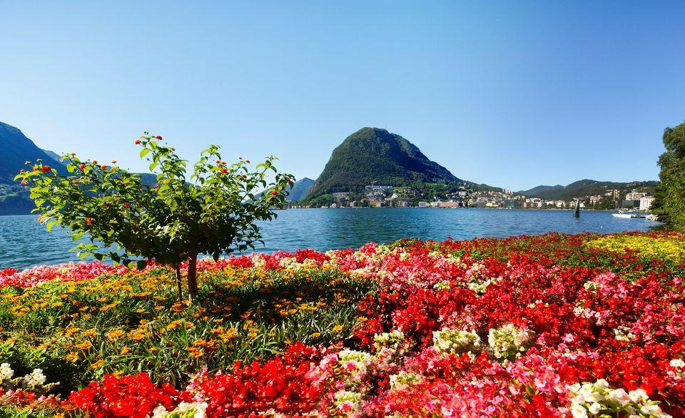 Крокусы у озера Лугано, Италия