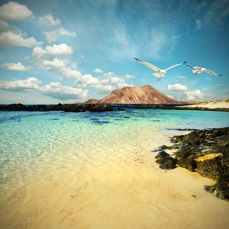 Two seagulls fly over a rocky beach in Fuerteventura, Spain