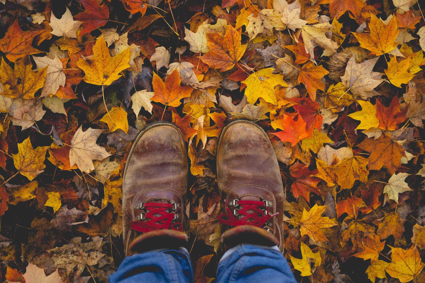 person wearing hiking shoes standing on fall colour leaves