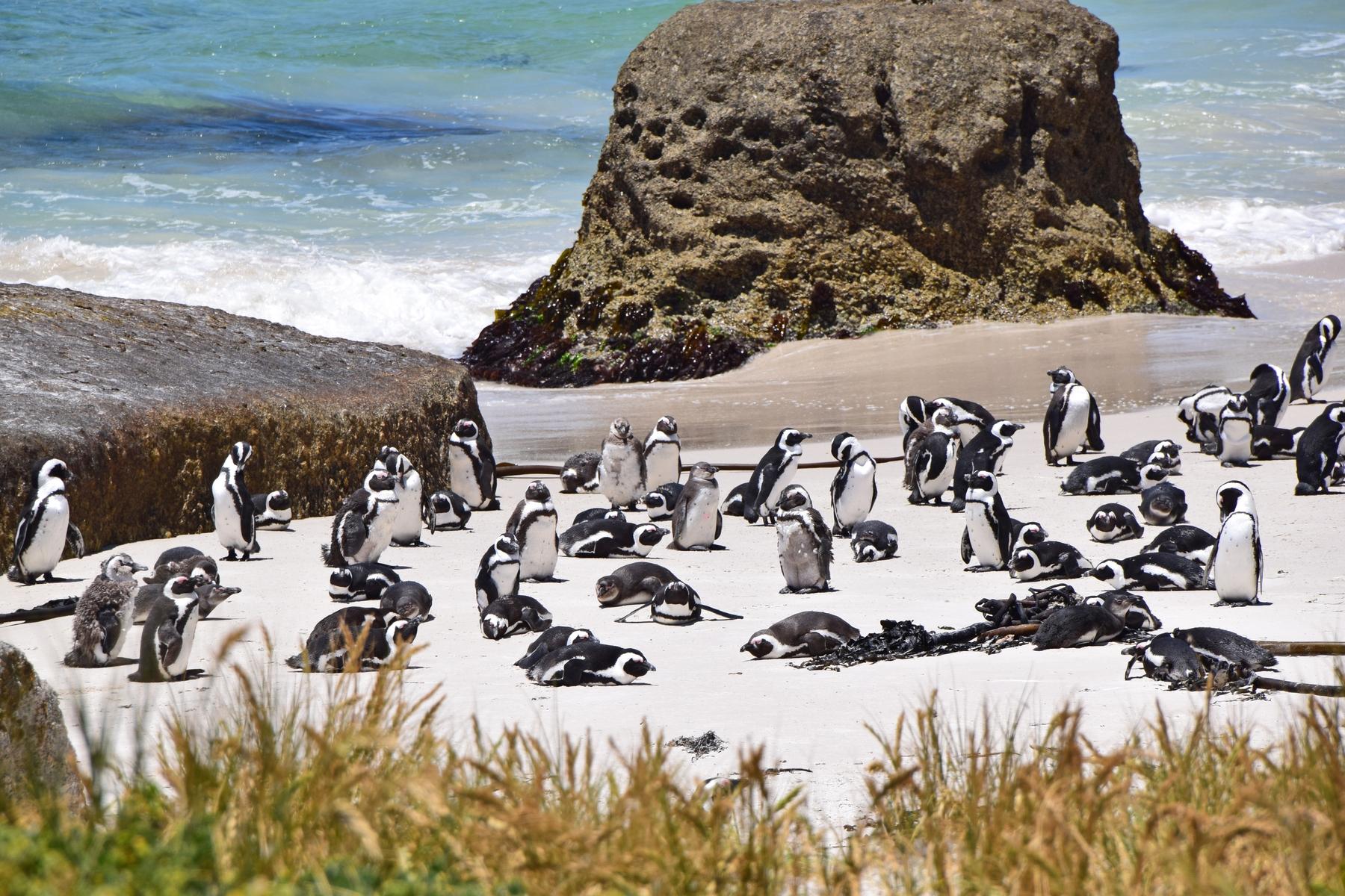 Южная Африка, путешествие всей жизни