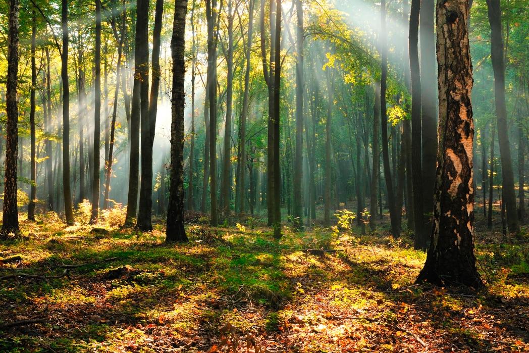 Hotele w lesie zapewniają odpoczynek pełną piersią.