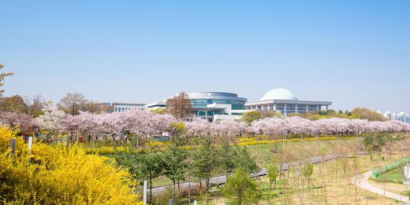 永登浦汝矣島(ヨンドゥンポ ヨイド)春の花祭りの桜並木