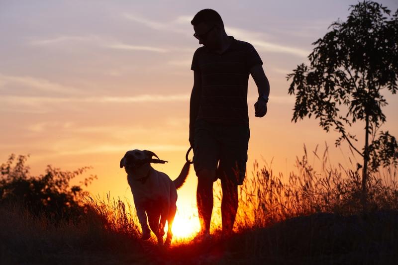 Mit dem Hund verreisen