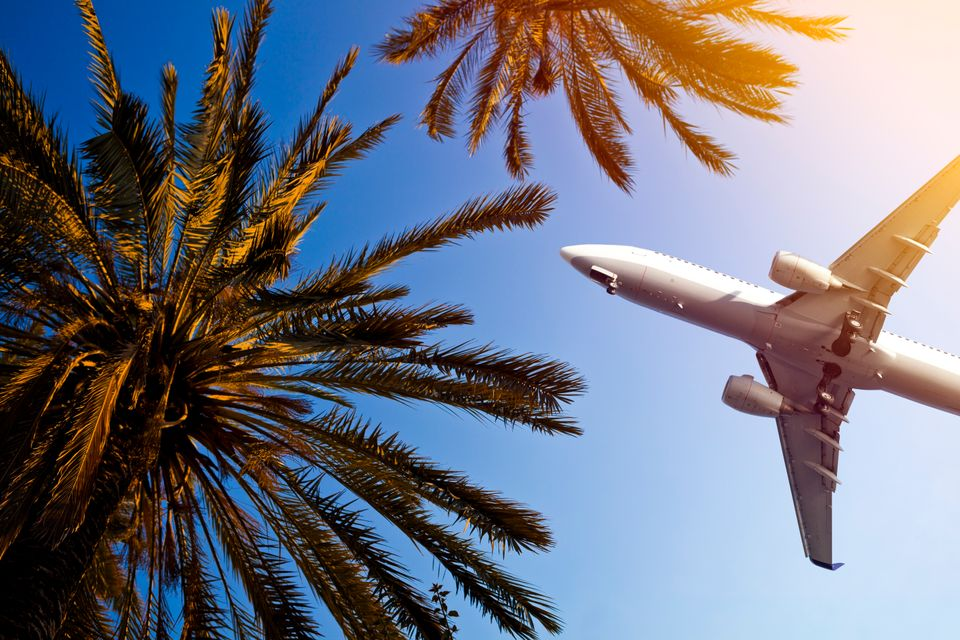 Plane flying overhead through palm trees
