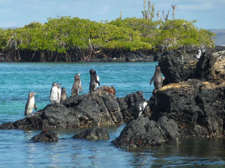Die schönsten Reiseziele in Südamerika: Galapagos-Inseln, Ecuador