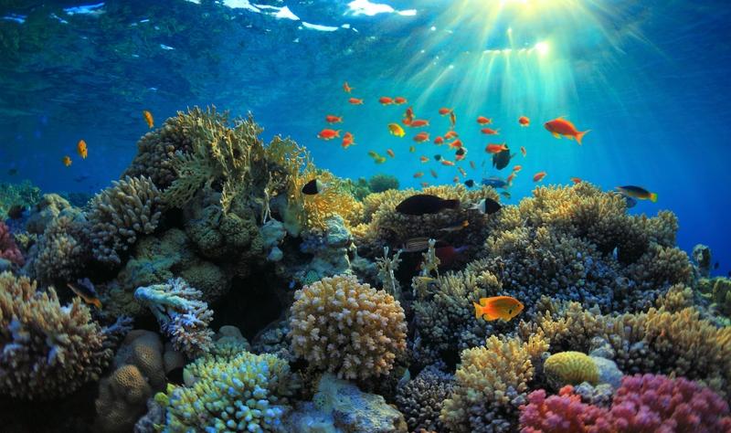 I 15 posti più belli da vedere in Africa: Mar Rosso