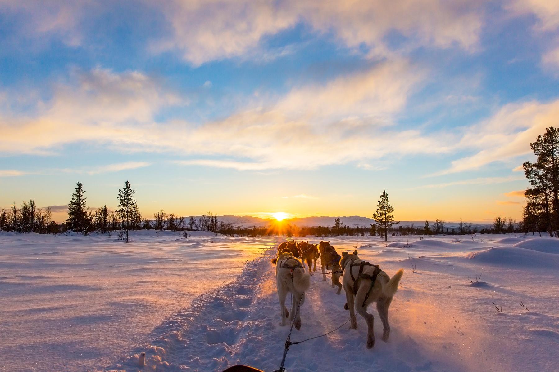 Где отдохнуть в России зимой. Поездка на собачьих упряжках в Карелии