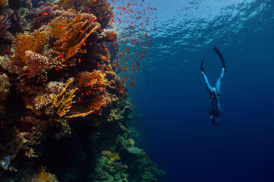 Дайвер в Красном море