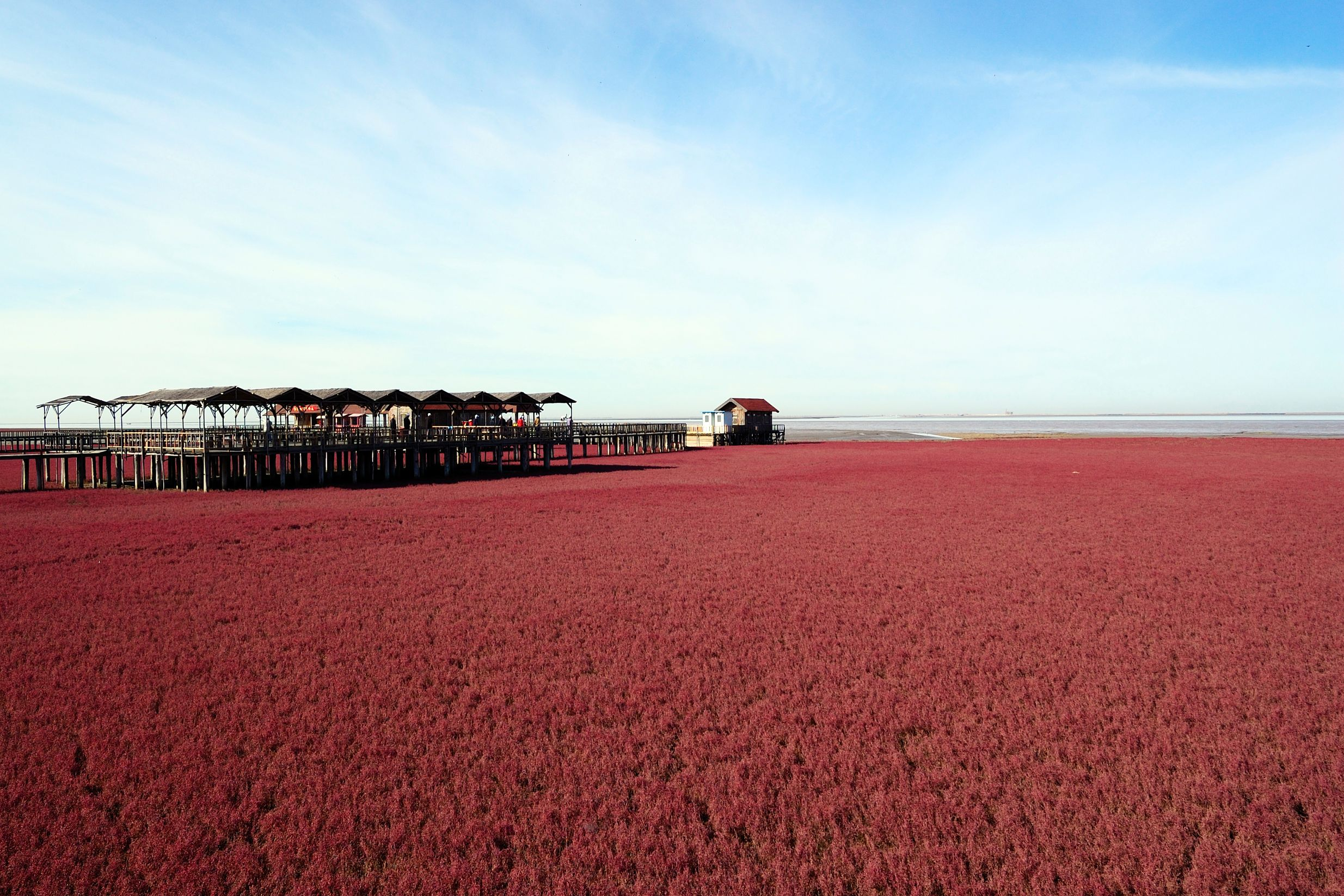 Red Beach, Panjin, China is one of the most colourful and magical places on the planet