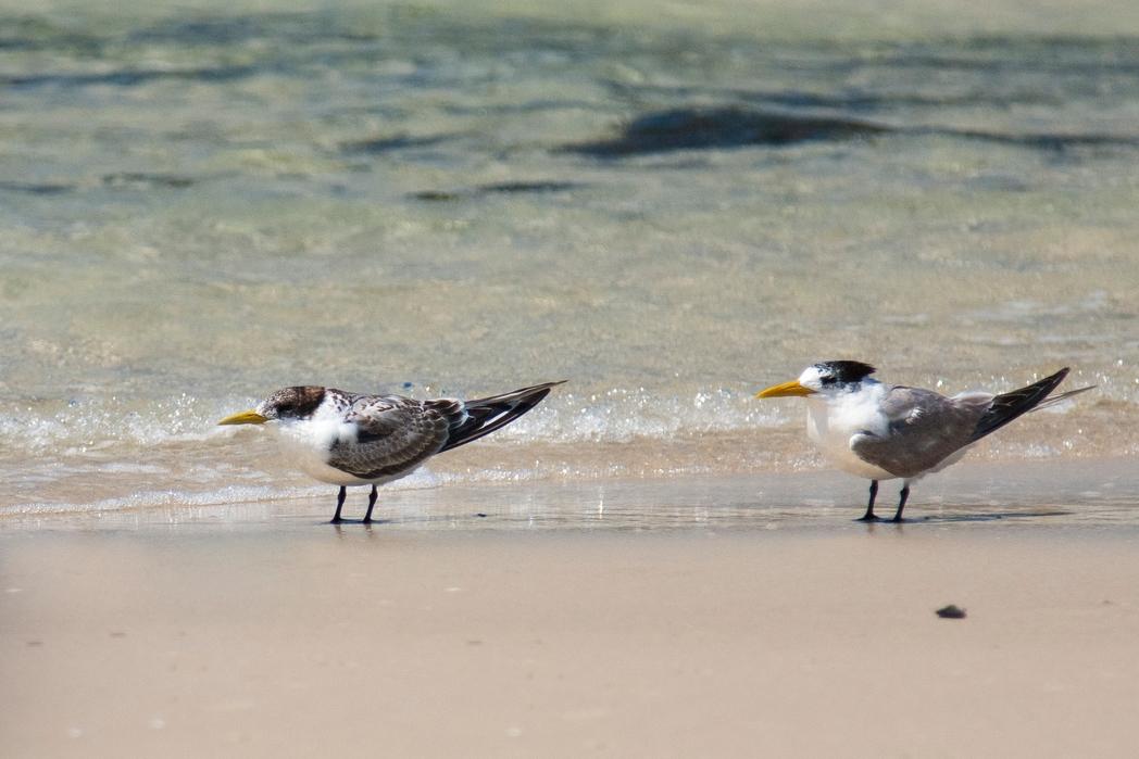 Παρατήρηση πουλιών στη Γαλικία.