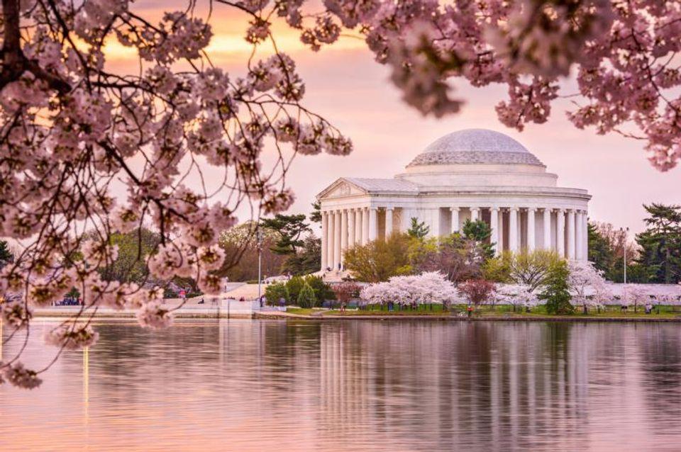 トーマス・ジェファーソン記念館(Thomas Jefferson Memorial)と一緒に眺める桜景色