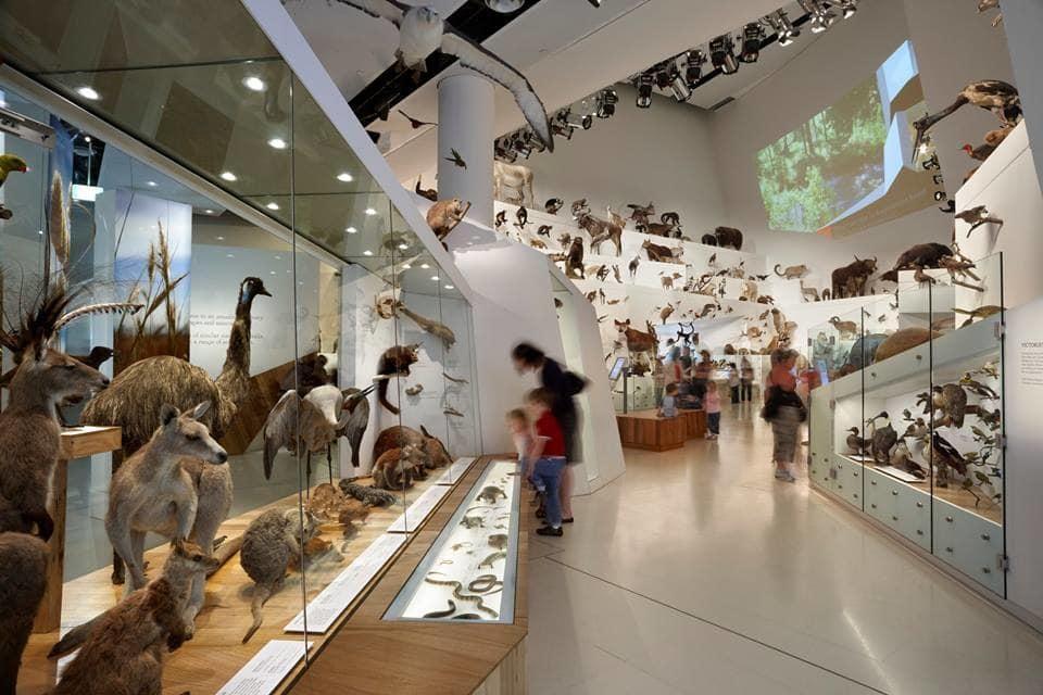 動物館展示著各種不同的澳洲動物。(圖片取自墨爾本博物館官方FB粉絲團)