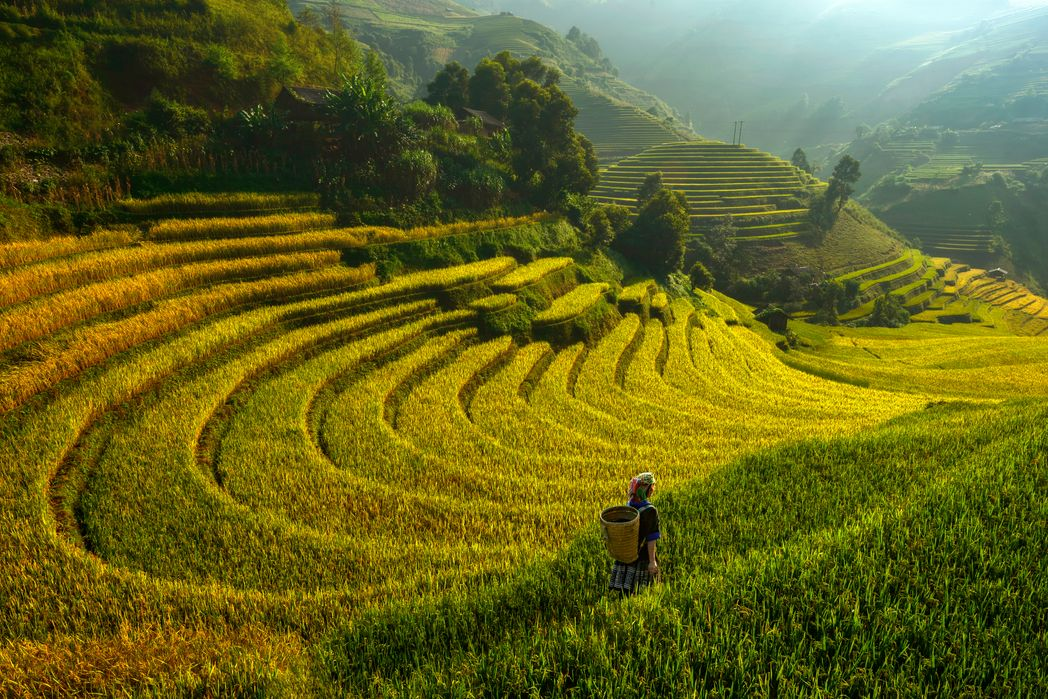 Bright morning of rice terraces in Mu cang chai, Yenbai - best time to visit Vietnam.