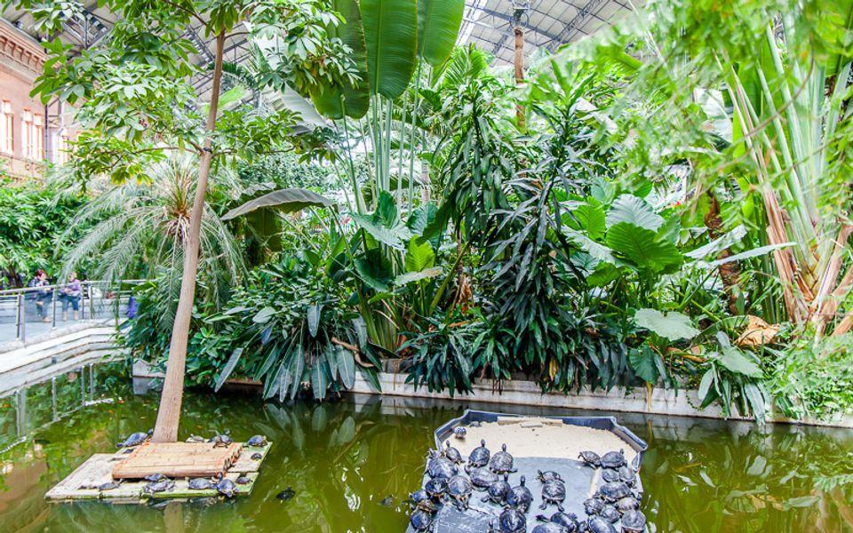 Πλούσια βλάστηση στον σταθμό Atocha - ταξίδι στη Μαδρίτη