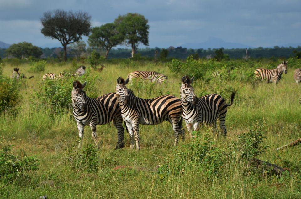 Die schönsten Nationalparks in Afrika: Kruger Nationalpark, Südafrika