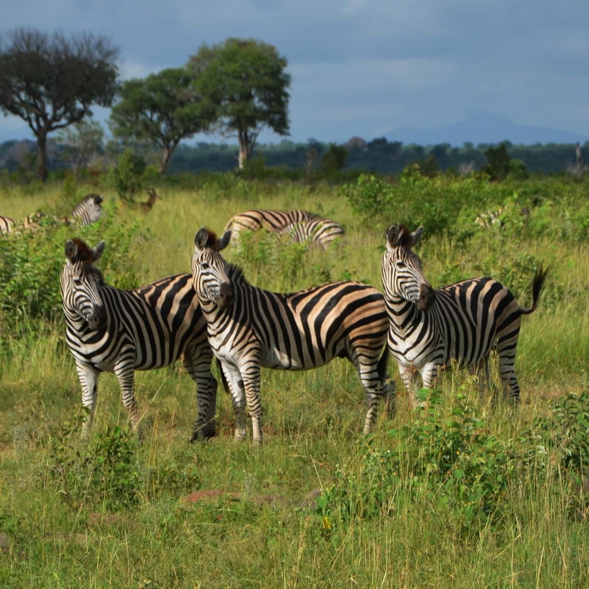 Reisen, die euer Leben verändern werden: Safari in Afrika