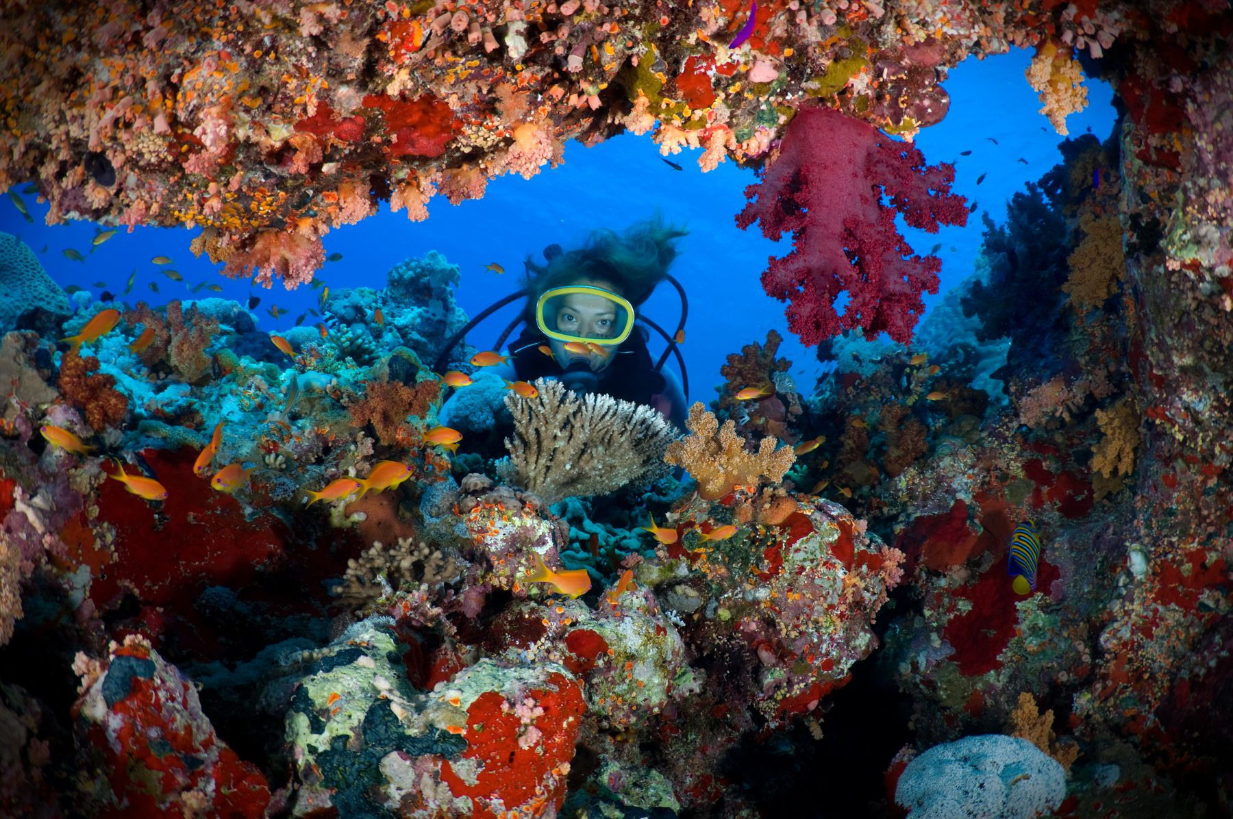Diver in between colorful coral