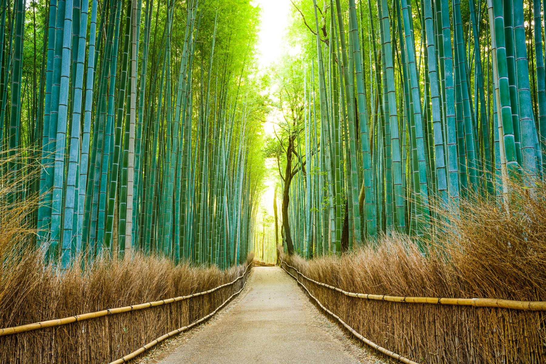 Cosa vedere a Kyoto Arashiyama