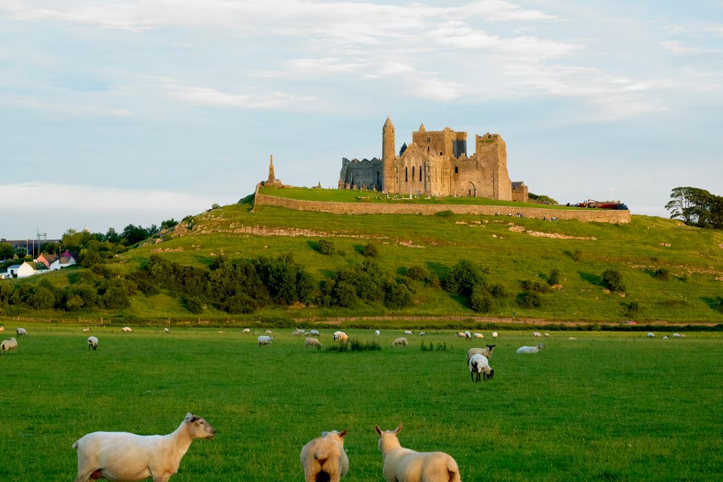 Rock of Cashel, Co. Tipperary surrounded by lush countryside and sheep