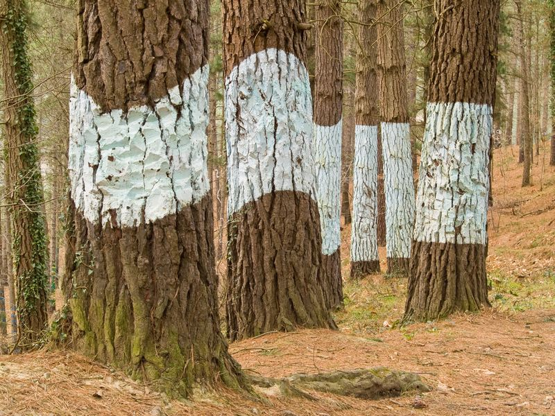 bosque de oma en el país basco