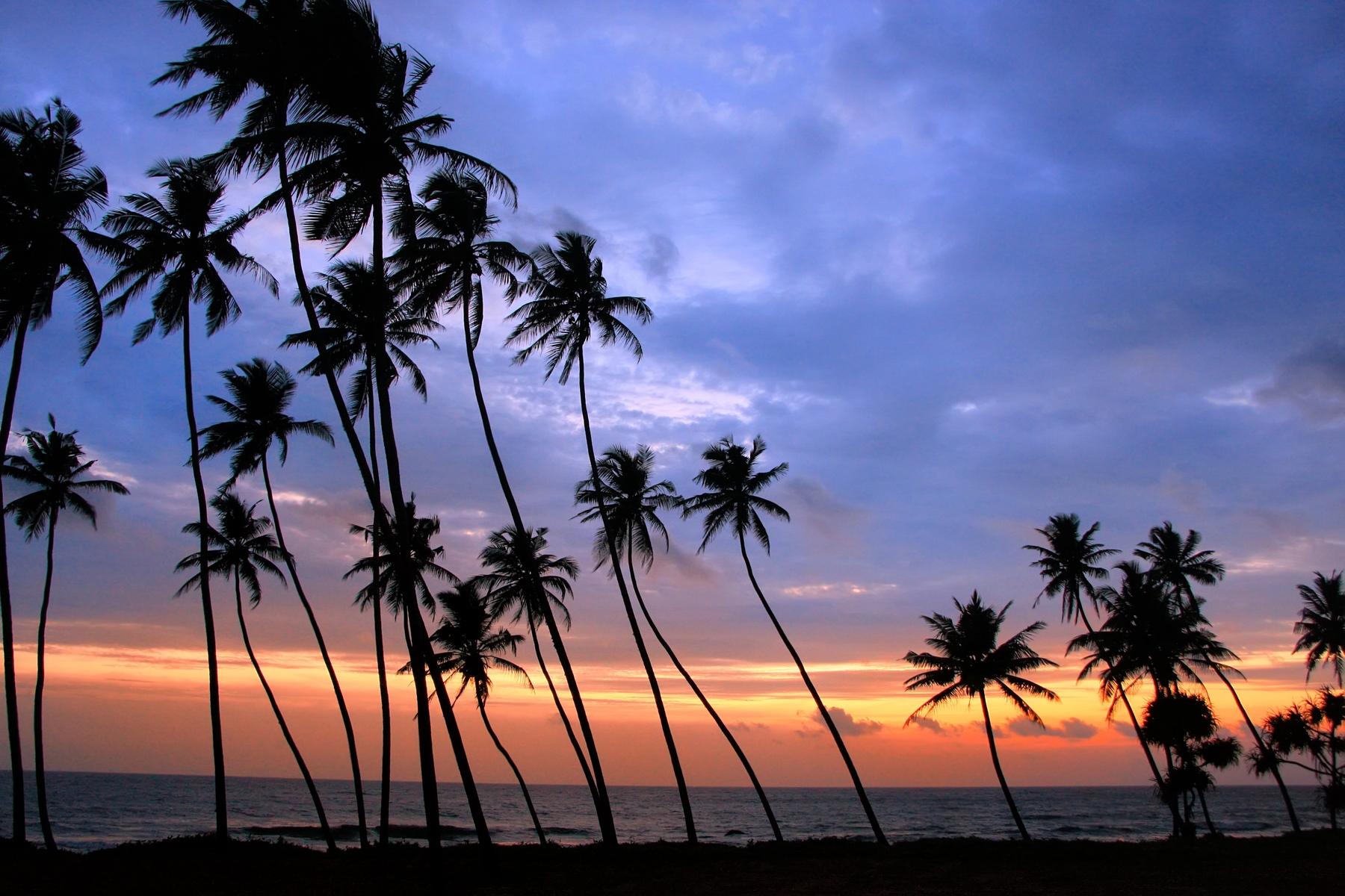 Где тепло купаться зимой: Хиккадува, Шри-Ланка