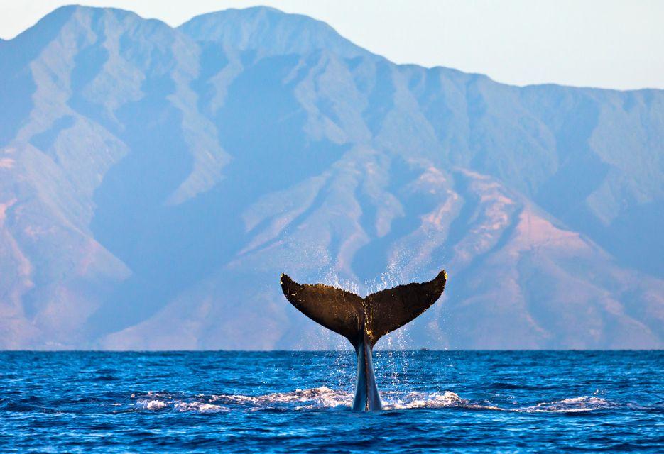 Ακολουθώντας τις φάλαινες στη θάλασσα του Ερμάνους.