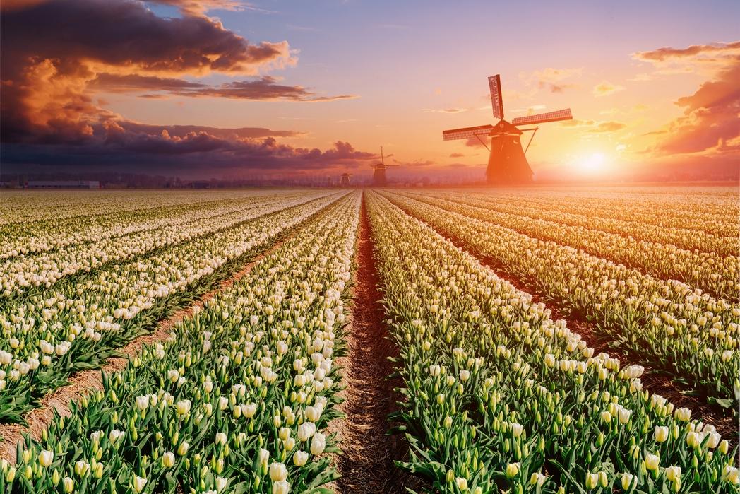 Hollanda Schengen Vizesi Ücreti