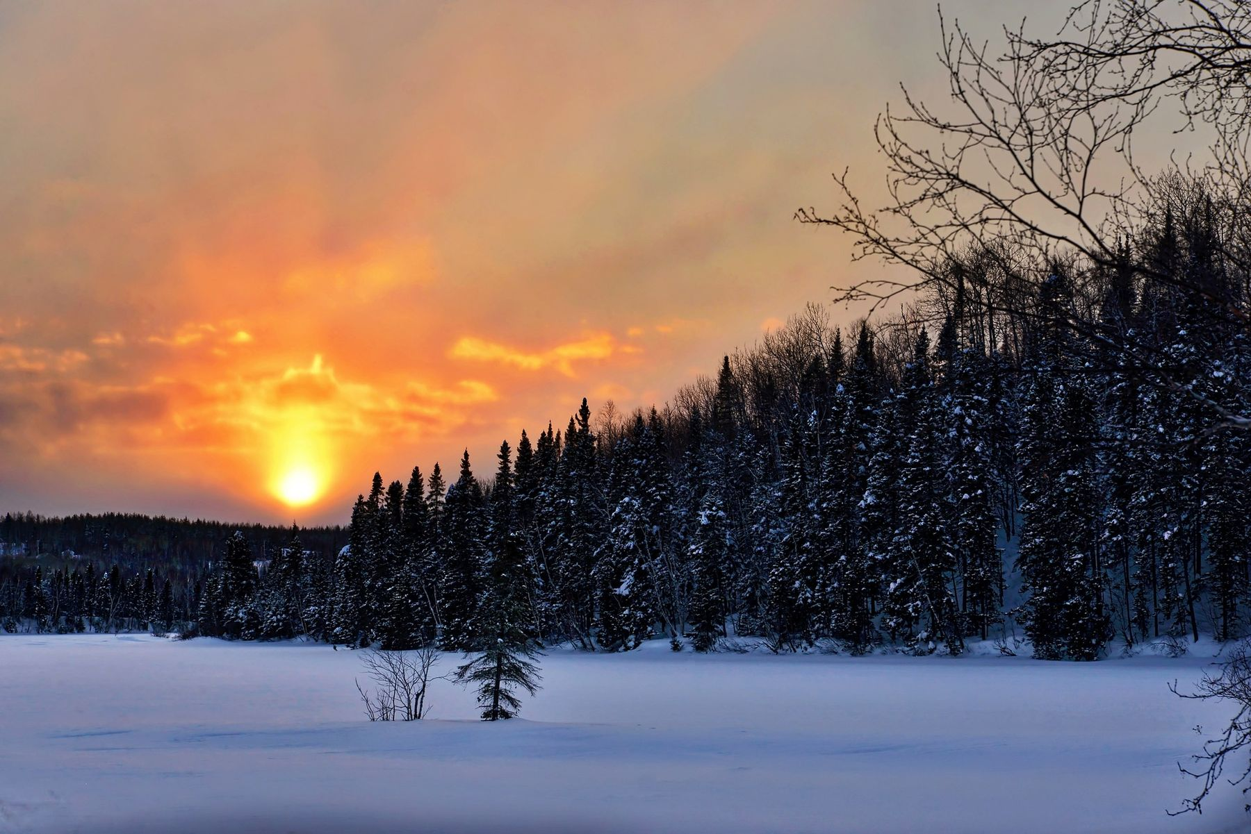 snowy evening and forest in the Quebec countryside