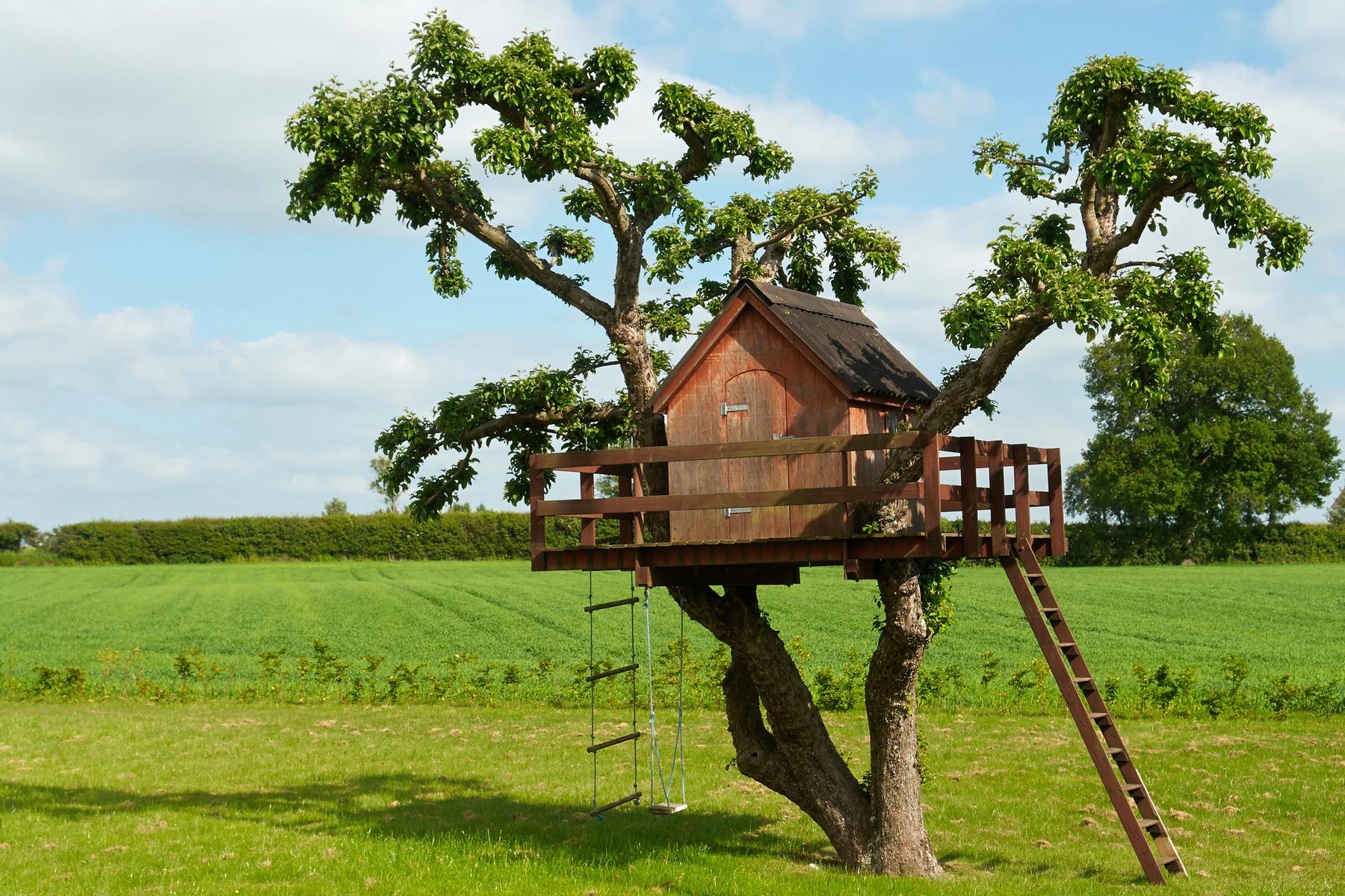 Piccoli Alberi Da Giardino le 10 case sull'albero dove dormire in italia | skyscanner