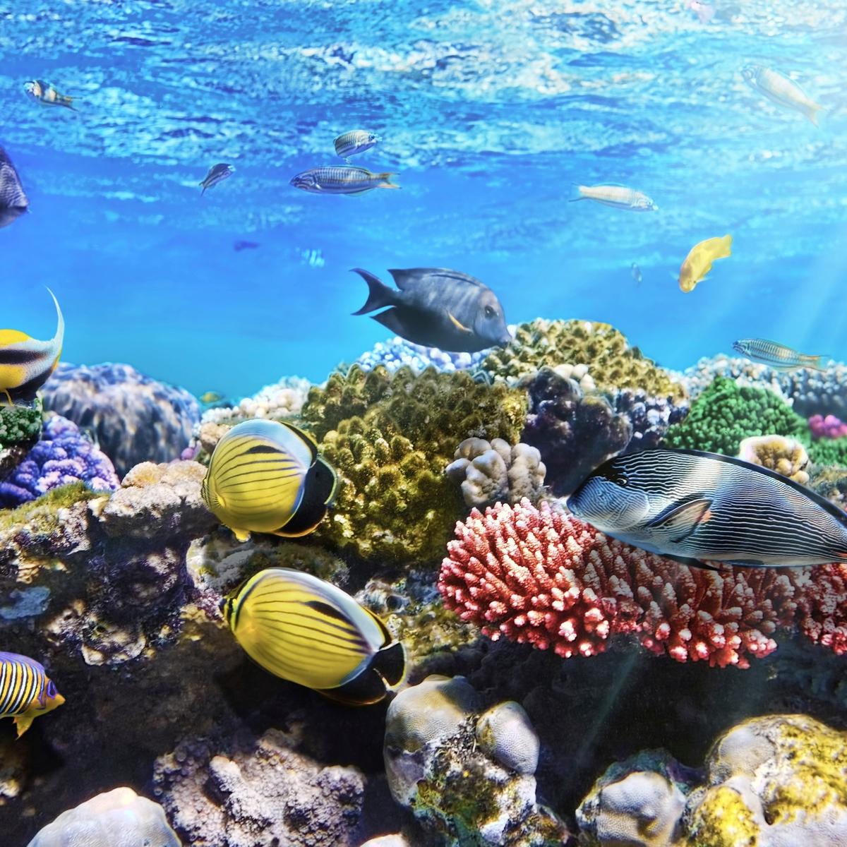 Die schönsten Reiseziele Afrikas: Rotes Meer, Ägypten