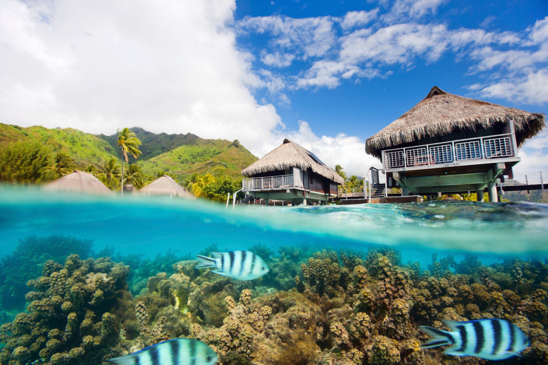 Underwater view of coral and fish under a hotel