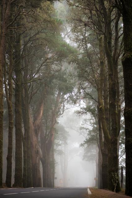 Συννεφιασμένη διαδρομή κάτω απ' τα δέντρα στην Τενερίφη, Κανάρια Νησιά