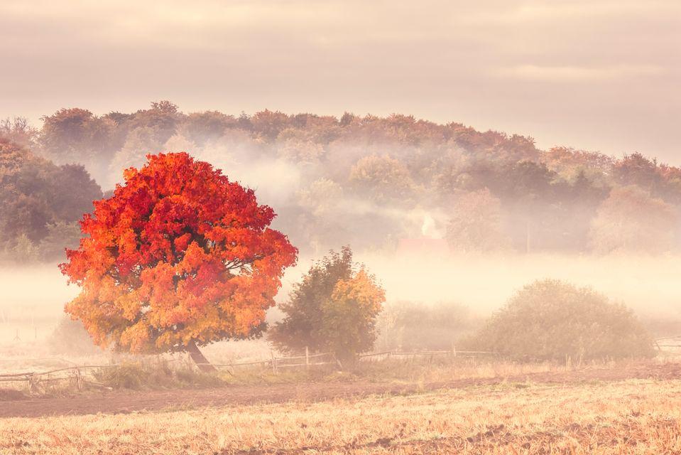 Magiczna jesień w Polsce: Góry Świętokrzyskie