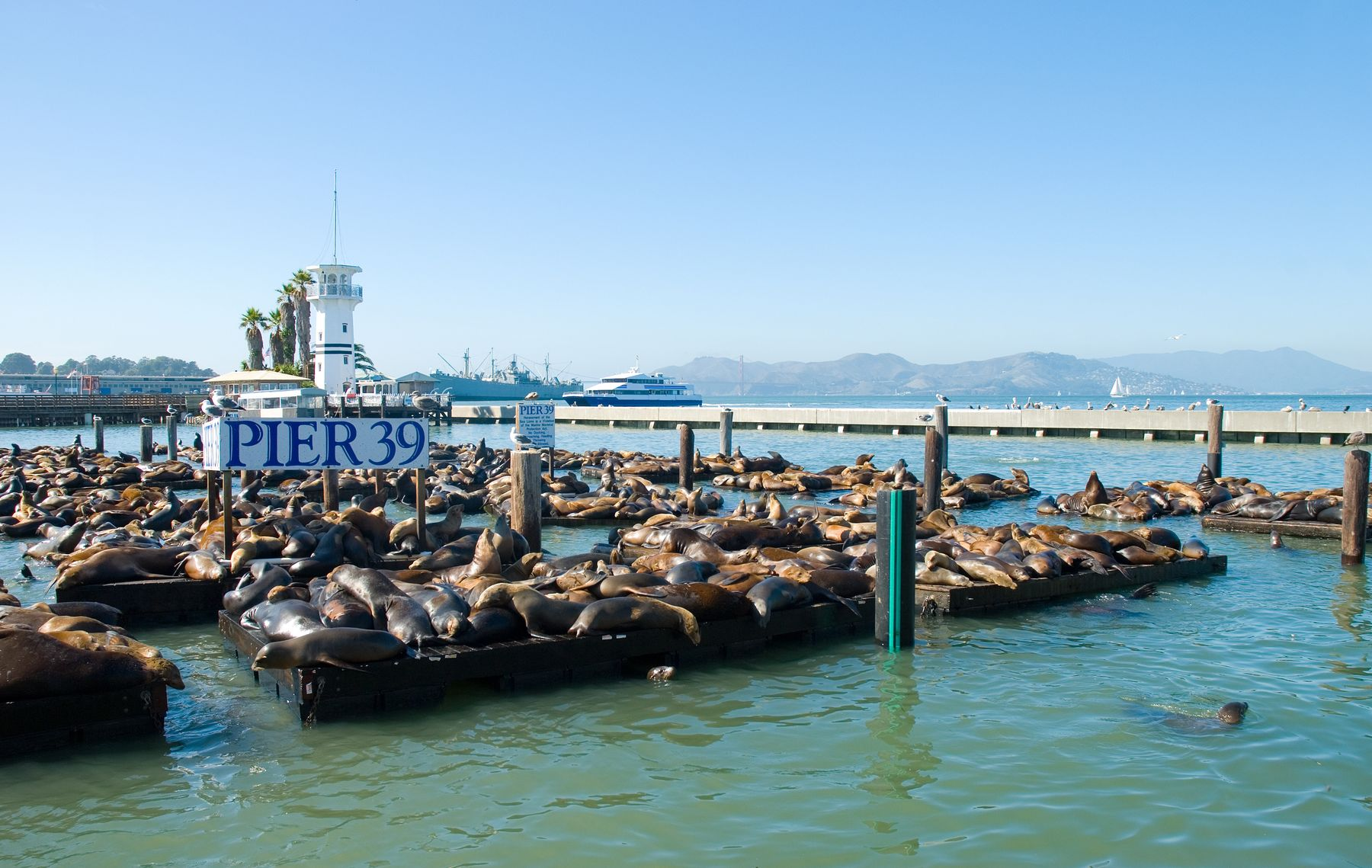 Sea lions lounging at Pier 39