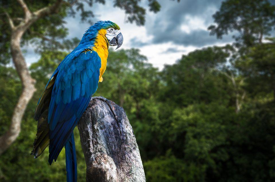 Die schönsten Reiseziele in Südamerika:  Amazonas, nördliches Südamerika