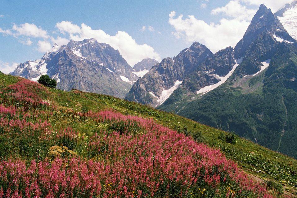 Весенний альпийский луг