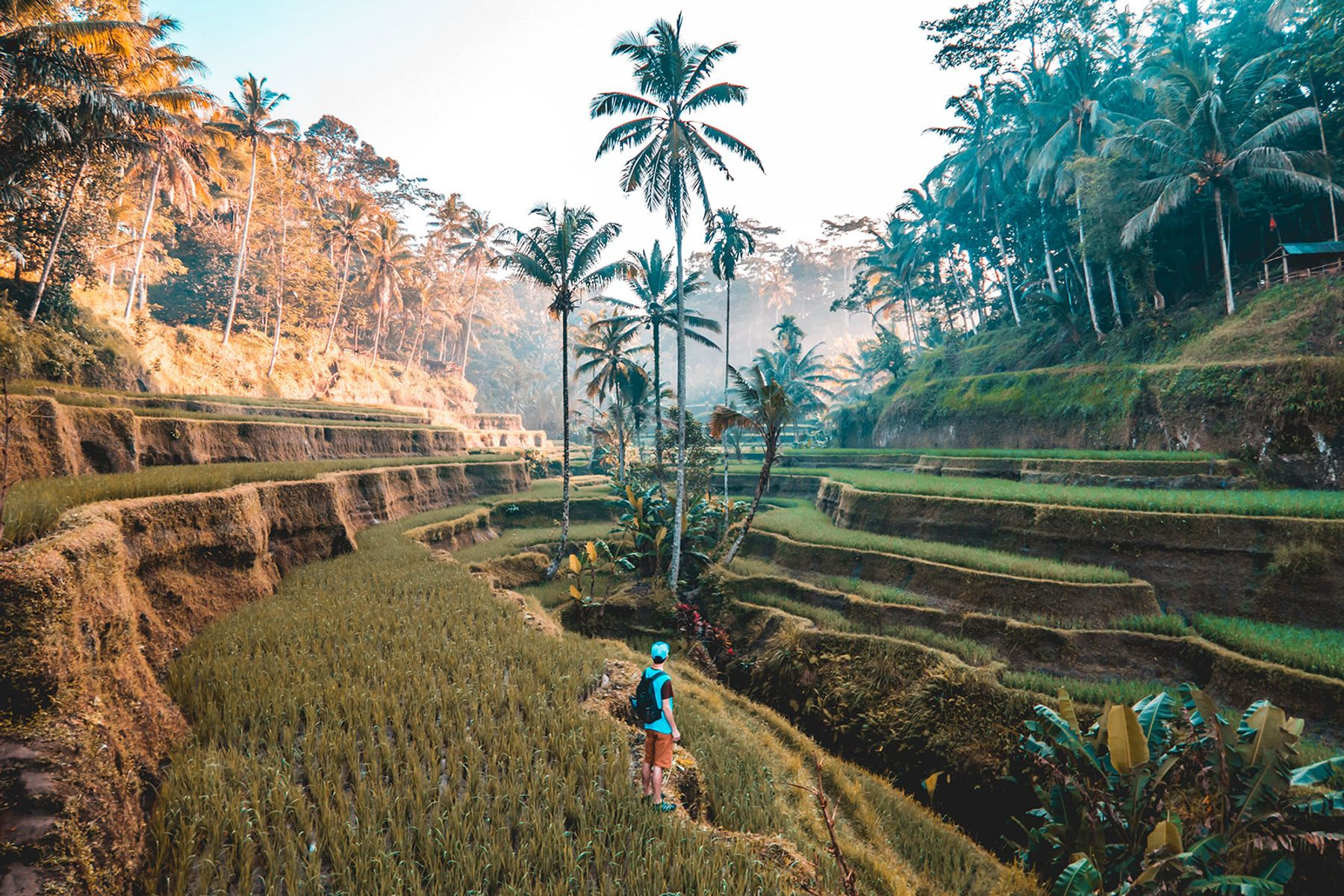 Iconic rice fields in Bali