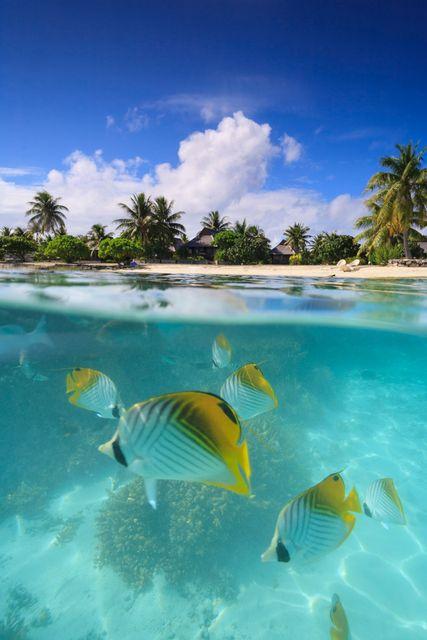 Fish underwater, Bora Bora, French Polynesia