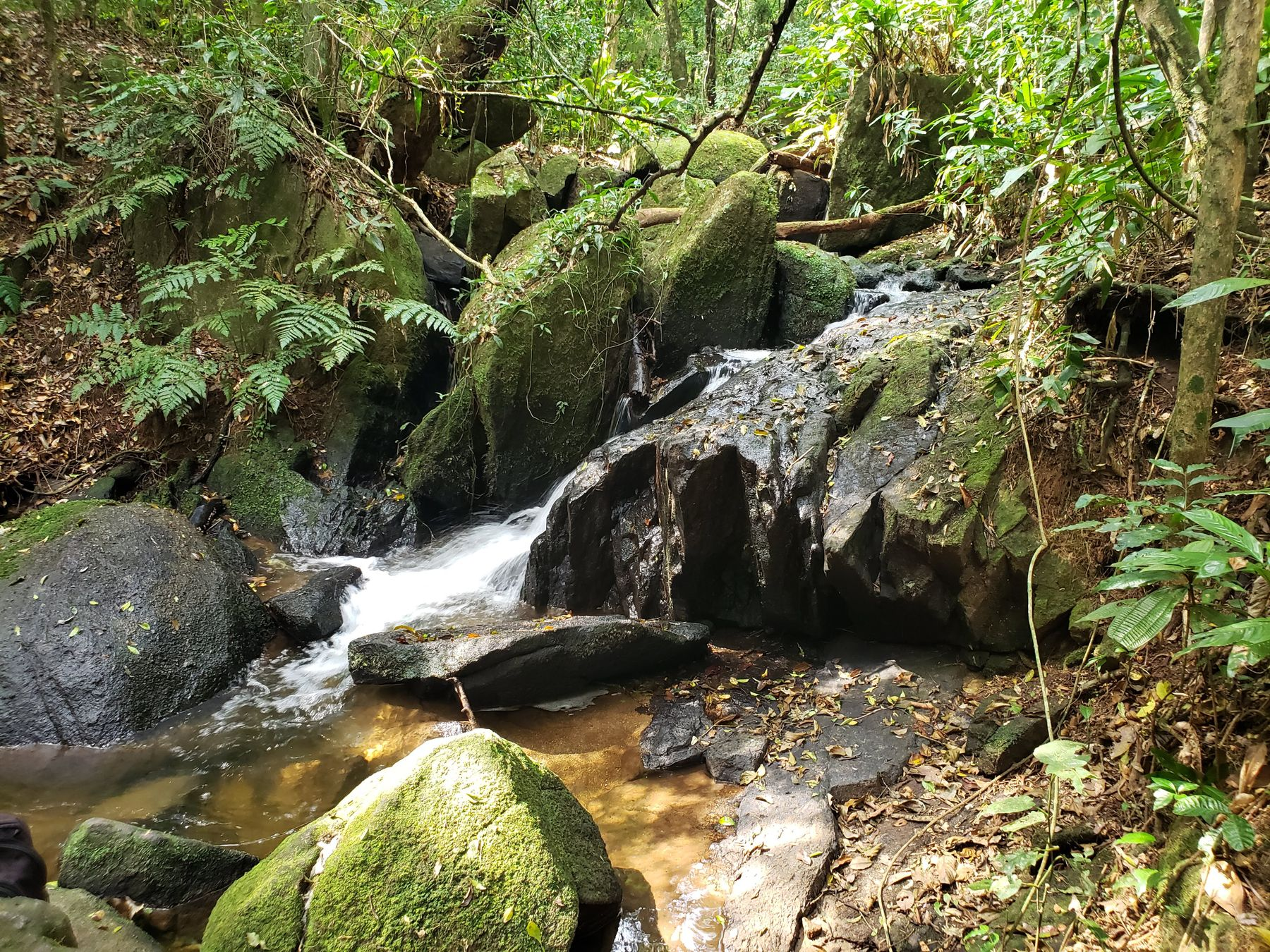 Trilha da Cachoeira no Parque da Cantareira - Núcleo Engordador - Perfeita para quem busca uma trilha com cachoeira em SP