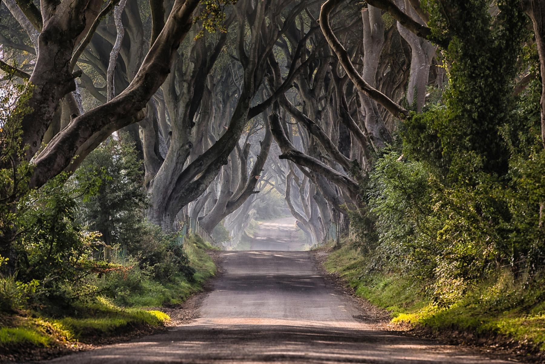 Буковая аллея Дарк Хеджес, недалеко от Белфаста, Северная Ирландия