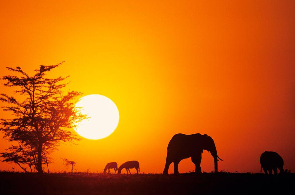 Слоны и зебры в Кении