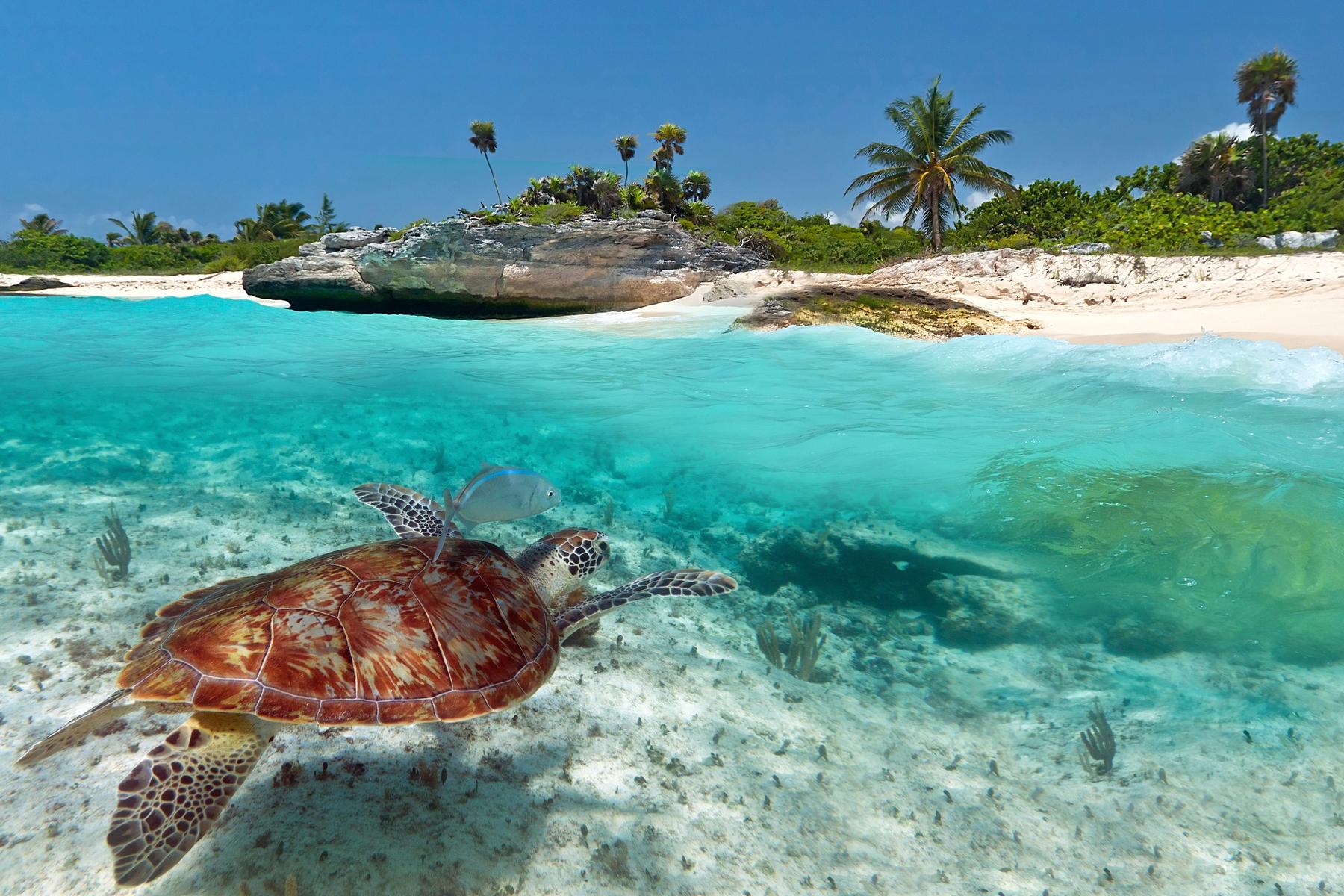 Reiseziel für den Osterurlaub 2021: St. Kitts und Nevis