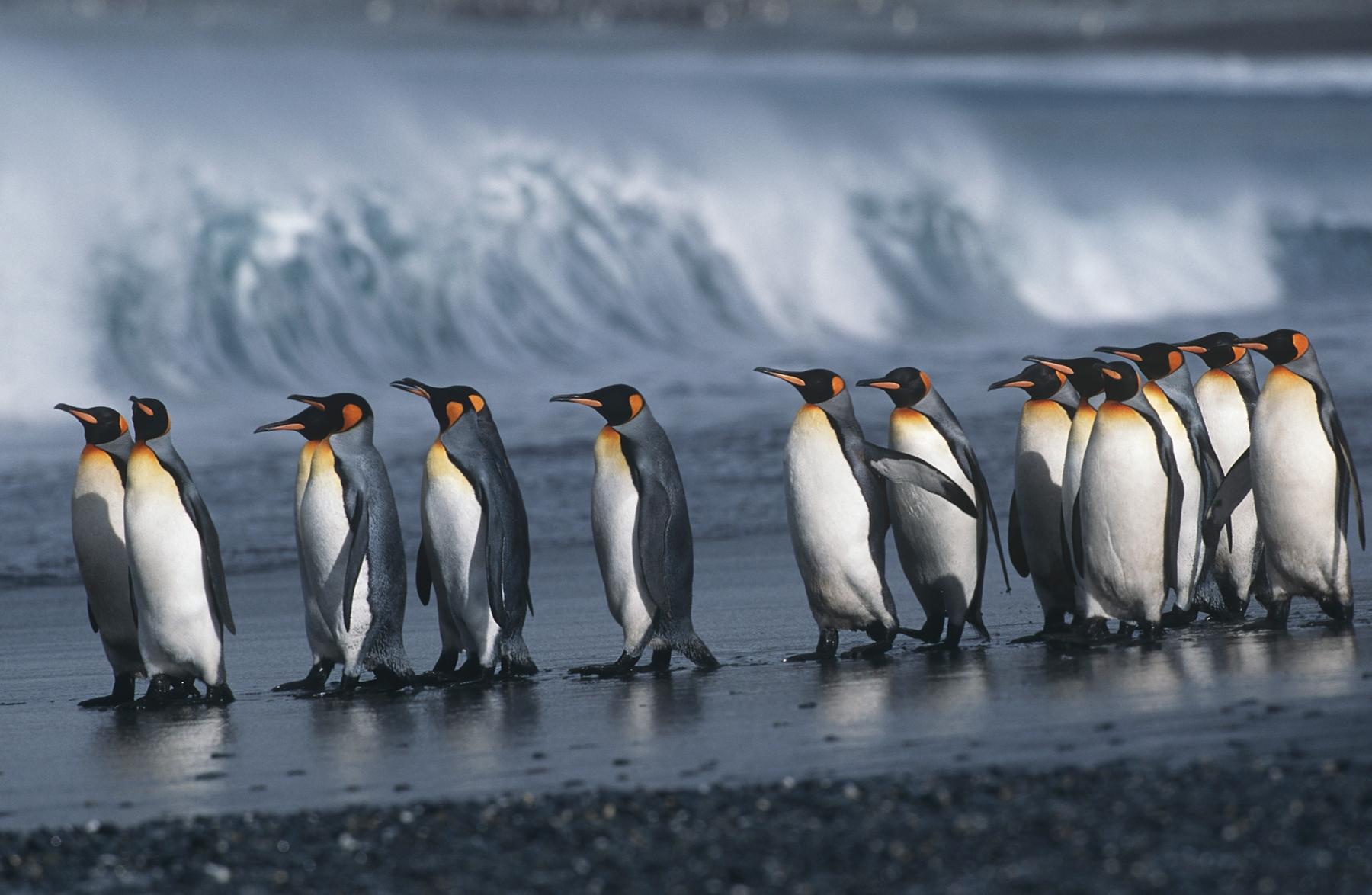 Где сохранилась нетронутая природа: Антарктика