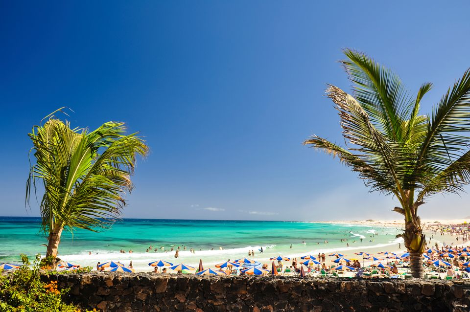 A busy beach full of umbrellas and two palms in Corralejo, Fuerteventura - one of the island's most popular resorts