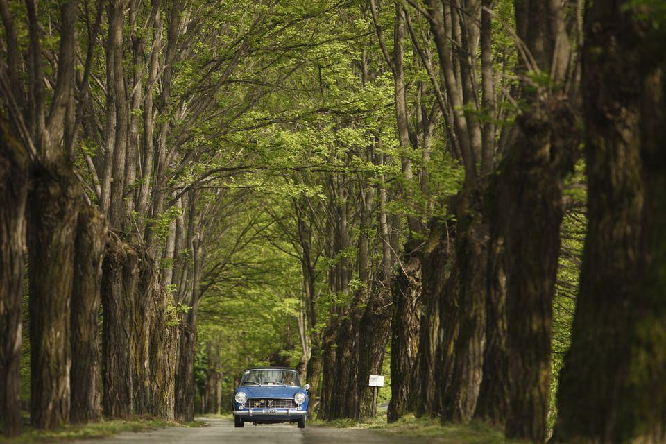 公路旅行德国在黑森林对面的德国汽车度假