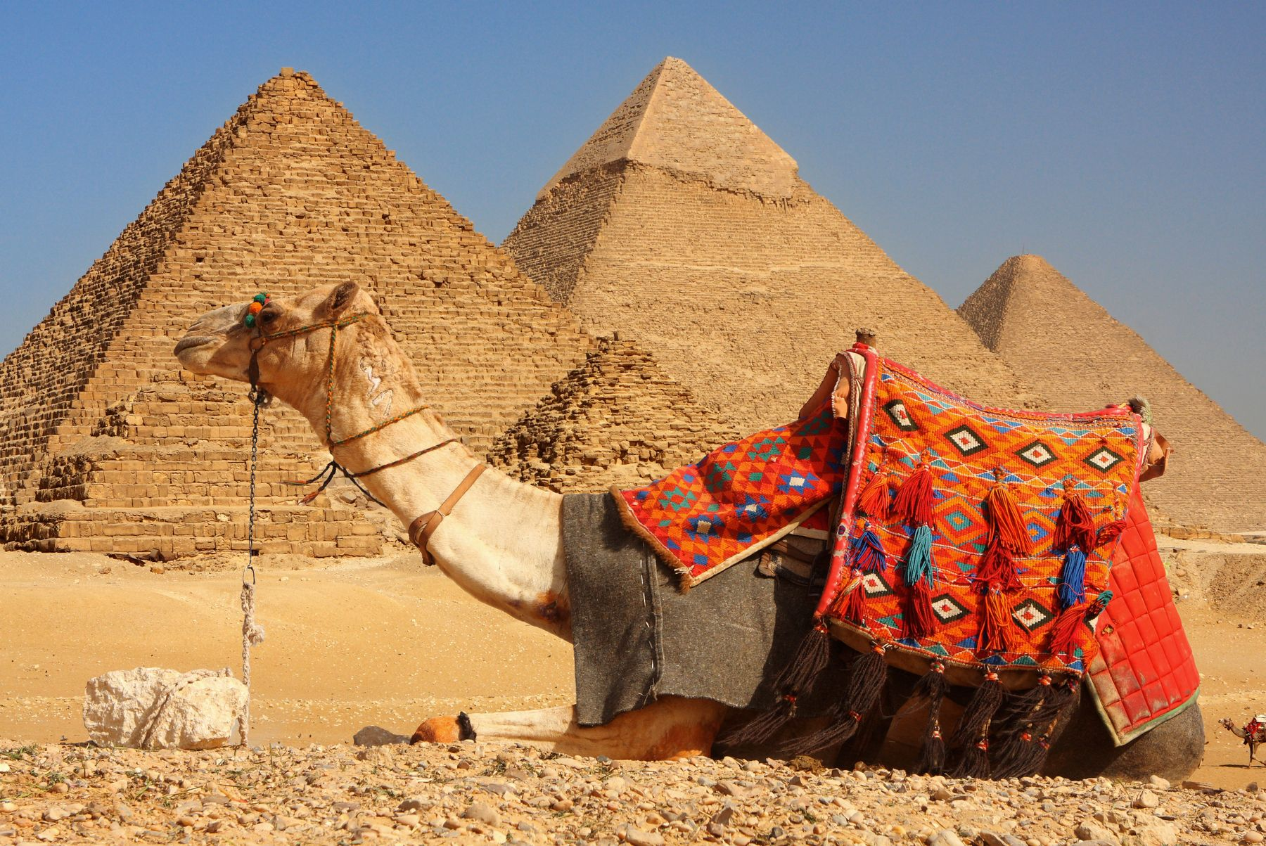 camel laying in front of pyramids on adventure trip