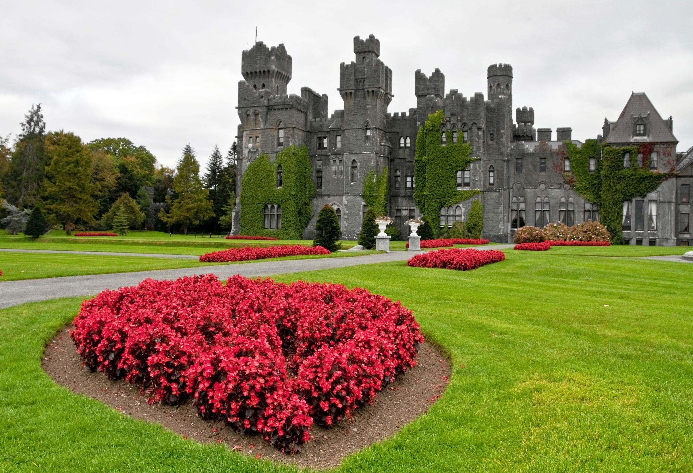 Patch of red flowers in the gardens of Ashford Castle, one of the most luxurious castle hotels in Ireland