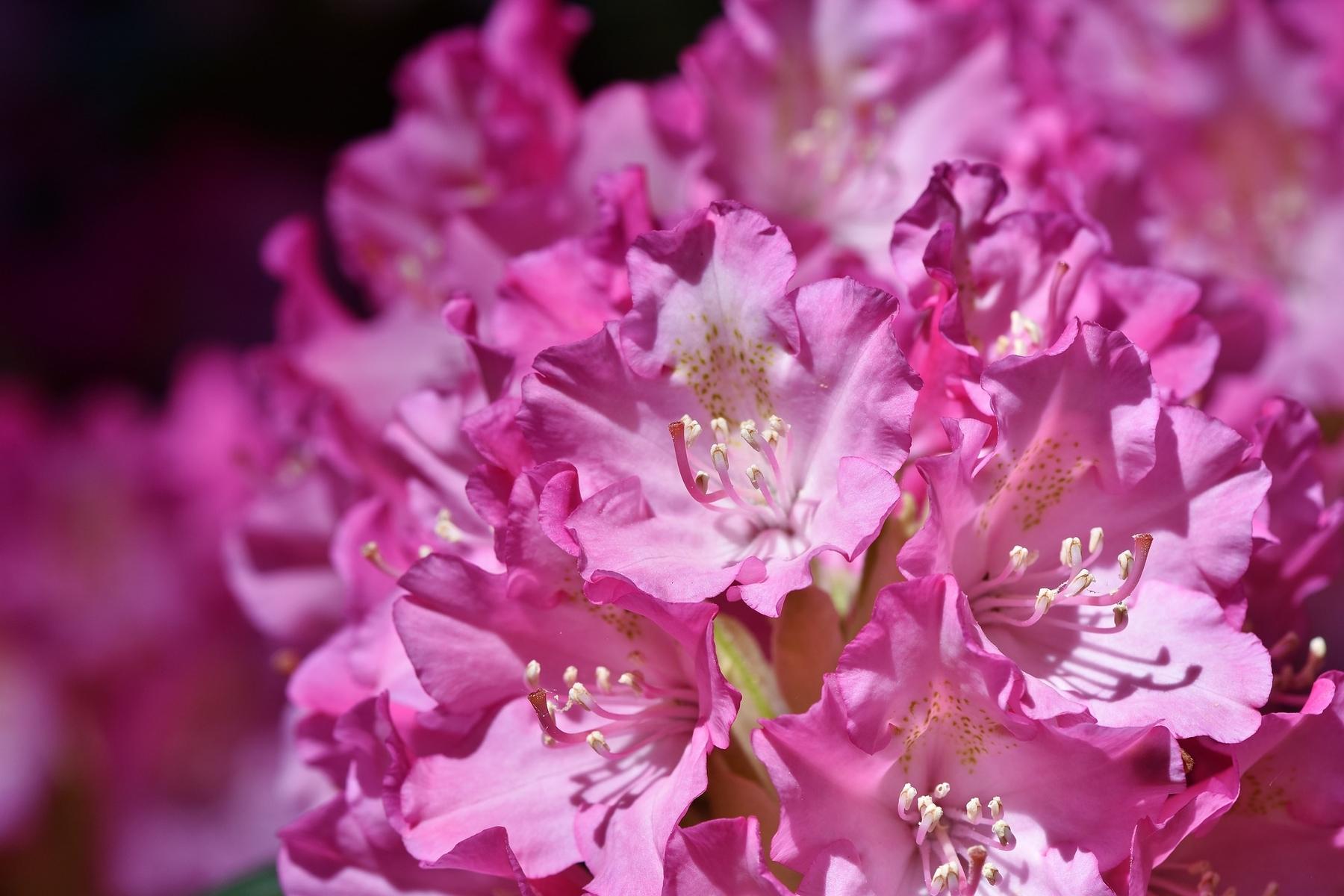 Fiori Del Mese Di Giugno viaggi floreali: dove vedere le più belle fioriture in