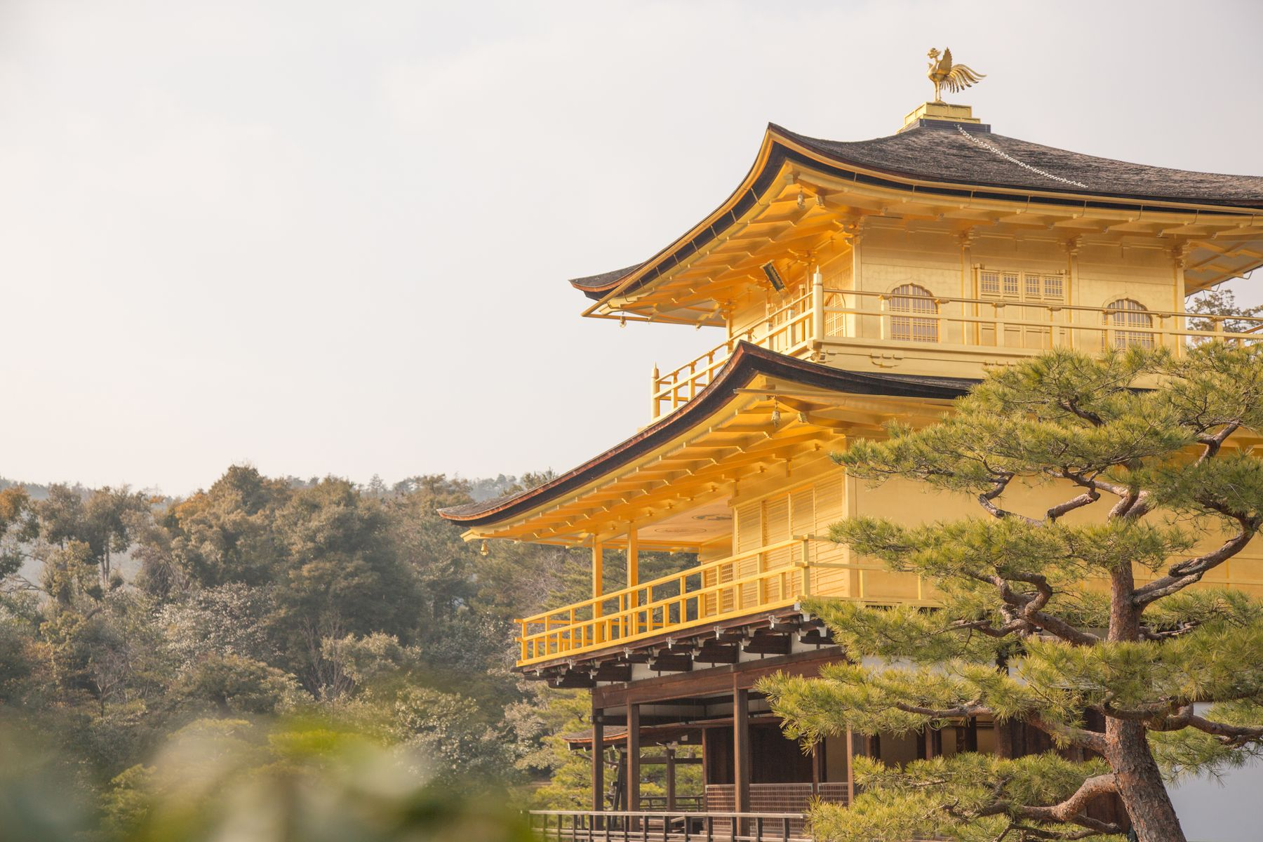 Photo shows a traditional yellow and brown Pagoda style temple with a tree in the foreground and hills behind it.